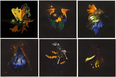 Mat Collishaw, 'Insecticide', 2010