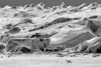 Paul Nicklen, 'Polar Vista', 2017