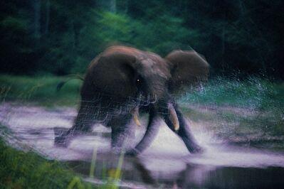 Michael Nichols, 'Forest Elephant, Central African Republic', 1993