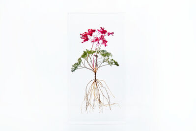 Azuma Makoto, 'Block Flower Four, Dicentra Peregrina', 2018