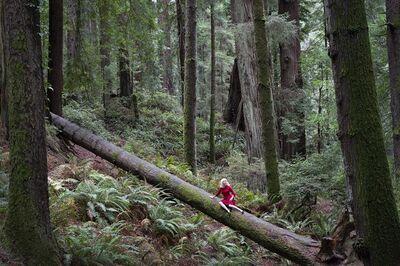 Nicole Cudzilo, 'Forest, 1/12', 2019