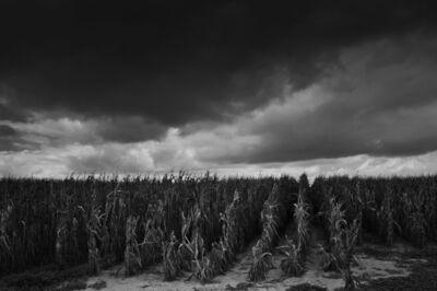 Debbie Fleming Caffery, 'Dead Cornfield', 2011