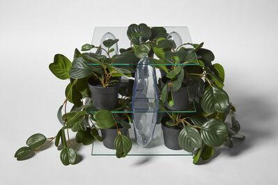 Patrick Jackson, 'Shelving Unit (Plants)', 2020