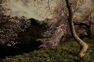 Ori Gersht, 'Chasing Good Fortune: Tokyo Imperial Memories - After Dark', 2011