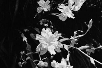 AMI SIOUX, 'Flowers Outside Shrine, Shikoku, Japan, ', 2014