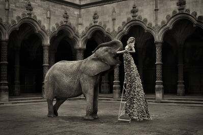 Marc Lagrange, 'The Elephant in The Room', 2015