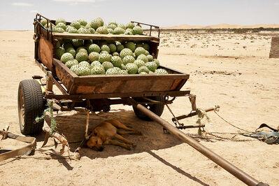 Margaret Courtney-Clarke, '!Nara melons (Acanthosicyos horridus)', 2017