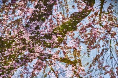 Tokihiro Sato, 'Sakura on Sakura #2', 2019