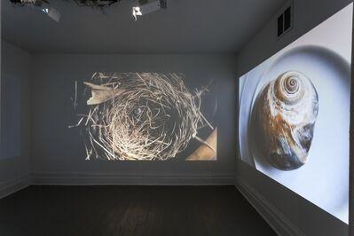 David Pohl, 'Vexations', 2017