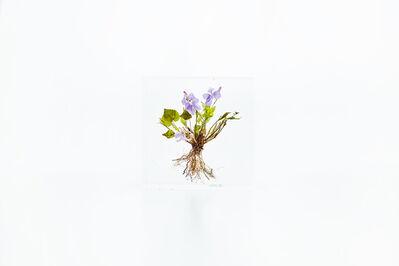 Azuma Makoto, 'Block Flower Nine, Viola chaerophylloides', 2018