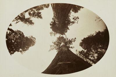 Carleton E. Watkins, 'Among the Treetops, Calaveras Grove', 1878