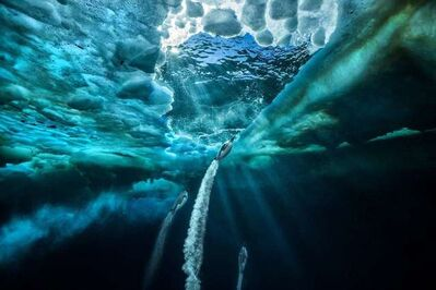 Paul Nicklen, 'Propulsion', 2011