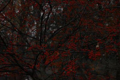 Shen Wei 沈玮, 'Hawthorn Tree', 2016