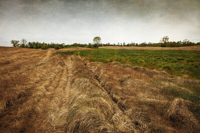 Jerry Freedner, 'Farm Field 6', 2013