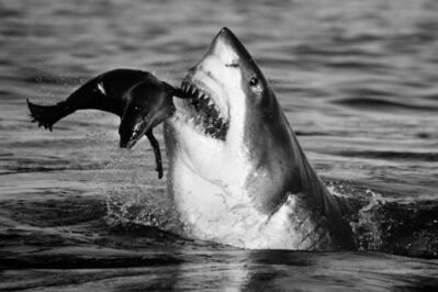 David Yarrow, 'Jaws', ca. 2011