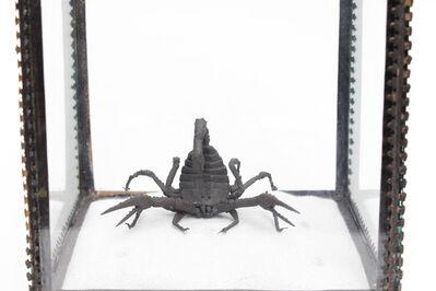 Mary O'Malley, 'Middle Eastern Deathstalker Scorpion', 2017