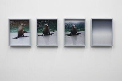 Elad Lassry, 'Sea Lions', 2010