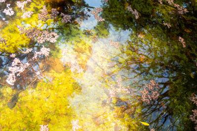 Rachel Berkowitz, 'Reflections No. 7 - Contemporary Digital Photograph ', 2020