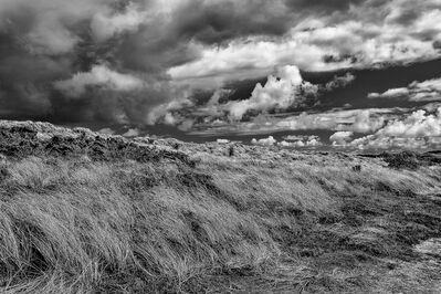 Barry Guthertz, 'Windswept Tresco Island, Cornwall, England'
