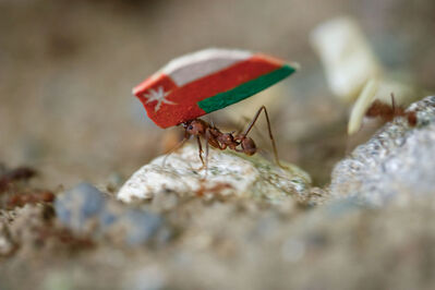 Donna Conlon, 'Coexistence (ant with Oman flag)', 2008