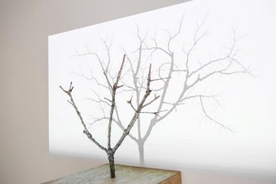 """Samuel Rousseau, '""""Untitled"""" Serie """"The tree and its shadow', 2008"""