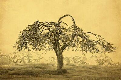 Joyce Tenneson, 'Apple Tree', 2016