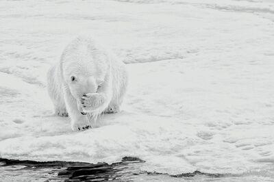 Michael Aw, 'How Much Can A Polar Bear Bear? (Horizontal)'