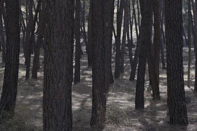 Willie Doherty, 'Trees near Alfacar', 2018