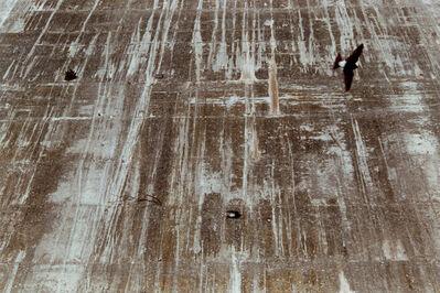 Frank Mädler, 'Wege:Ein Strauch, Zwei Vögel', 2003