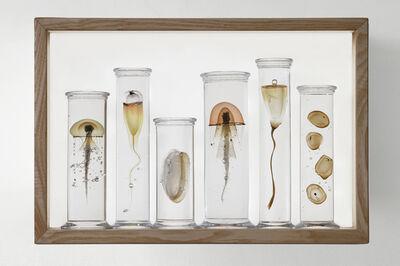 Steffen Dam, 'SIX PART SPECIMEN BOX', 2019
