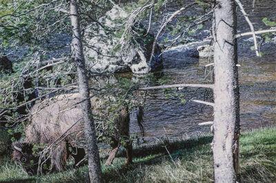 Chia-Ning Huang, 'Yellowstone National Park - Firehole River', 2019
