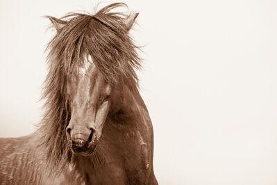 LISA CUEMAN, 'Rockstar - Wild Horses of the Outer Banks', 2015