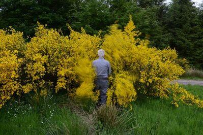 Andy Goldsworthy, 'Gorse walk. Dumfriesshire', 13