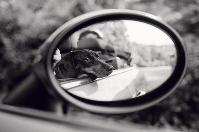 Priscilla Rattazzi, 'Lola, Rear View Mirror, East Hampton', 2007