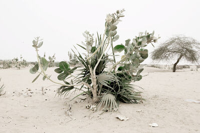 Sofie Knijff, 'Plant (Mali Series)', 2010