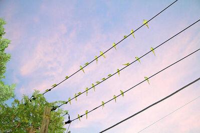 Yoshinori Mizutani, 'Tokyo Parrots 005', 2013