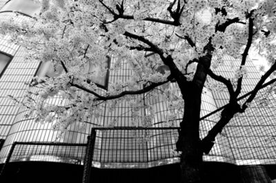 César Ordóñez, 'Tokyo Blur #10', 2013