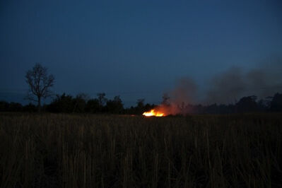 Apichatpong Weerasethakul, 'The Field', 2009
