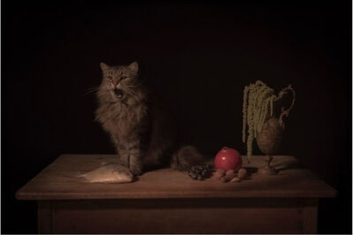 Tami Bahat, 'The Feline', 2017