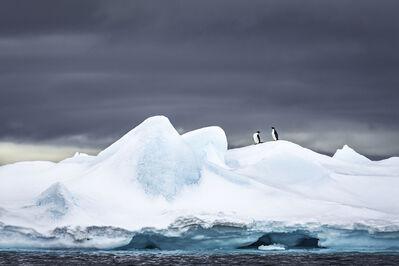 Cristina Mittermeier, 'Adelies on Ice'