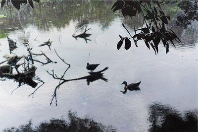 Chia-Ning Huang, 'Waterbirds in the Botanical Garden', 2020