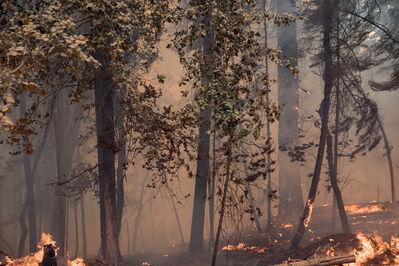 Julius von Bismarck, 'Fire with Fire (Green Mendocino)', 2019