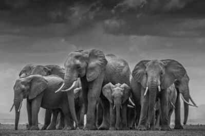 David Yarrow, 'Circle of Life II'
