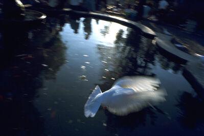 Michael Yamaoka, 'Dove, San Luis Obispo', 1965
