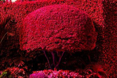 Robert Funk, 'Hedge Fun - Street Art made by the Rich - Hibiscus Island - Miami Beach', 2020
