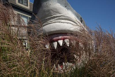 Steven Edson, 'Land Shark', 2020