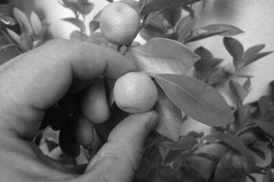 Satoshi Hirose, 'La terra è blu come un'arancia'