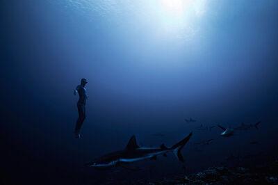 Franck Seguin, 'Sharks I ', 2018