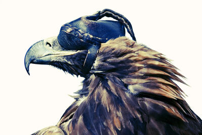 Lyle Owerko, 'Eagle Hunter 1', 2015