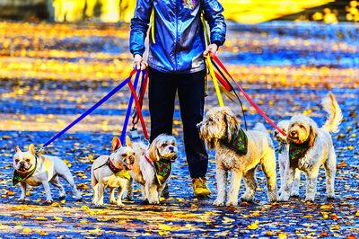 Mitchell Funk, 'Dog walker Central Park ', 2018